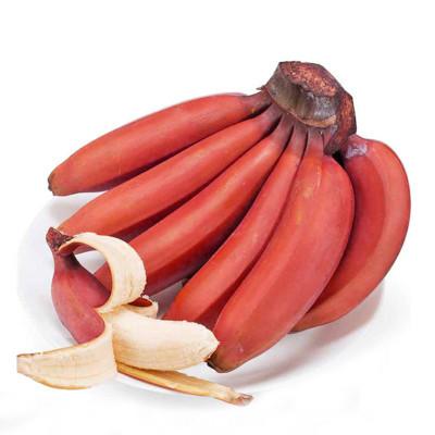 1号鲜客 红皮美人香蕉2.5kg 10根左右 新鲜水果